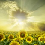 image - Sunflowers For Guy Finley Article